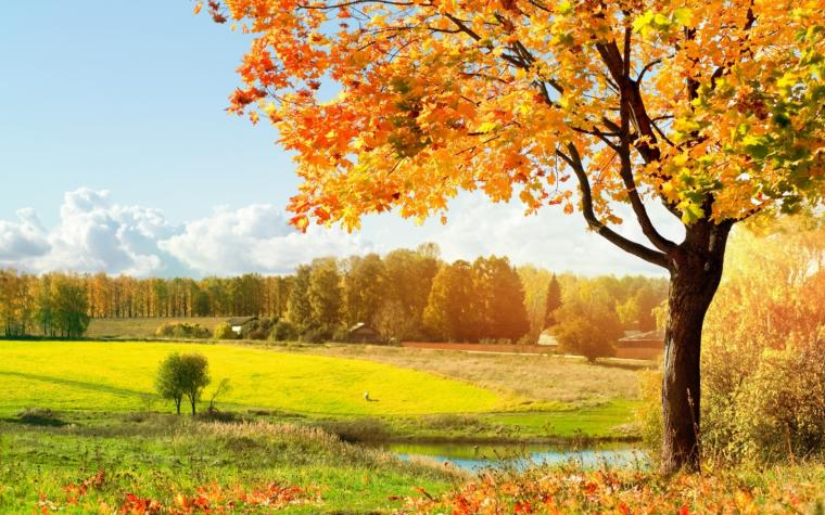 Beautiful Green Tree Wallpapers for Desktop completely to use