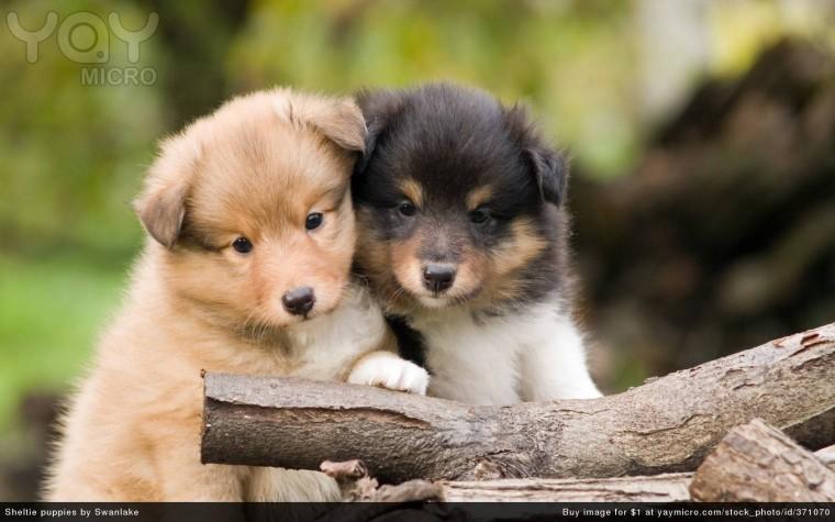 Cute Pups Cute Pups wallpaper