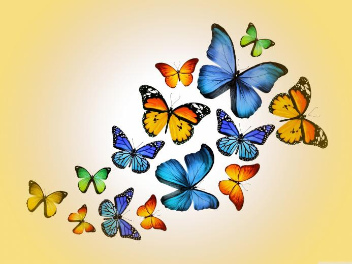 Butterflies 4K HD Desktop Wallpaper for 4K Ultra HD TV Wide