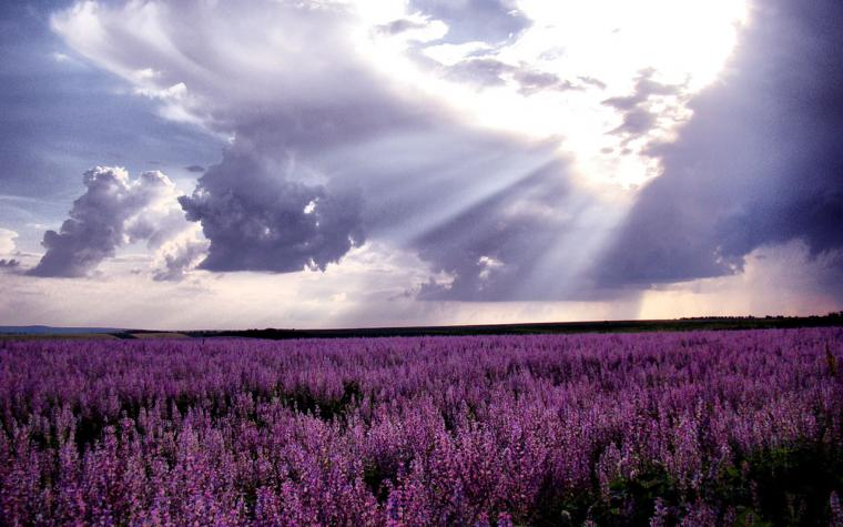 WallpapersWaiting for love lavender fields of photography wallpaper 2