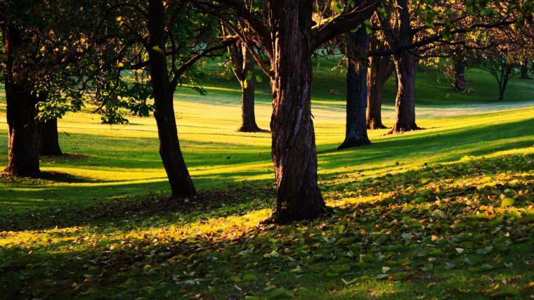 2048 x 1152 wallpaper http wallpaperstagnet view trees 2048x1152