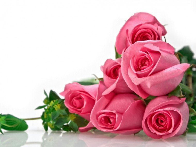 flowers for flower lovers Flowers wallpapers beautiful roses