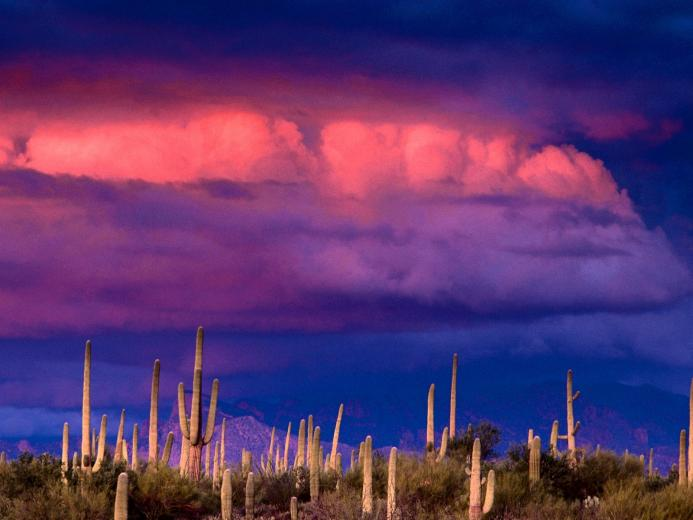 Nature Untitled Saguaros Spring Storm Saguaro National Park