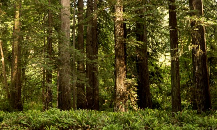 Wallpapers California USA Redwood National State Parks 5000x3000