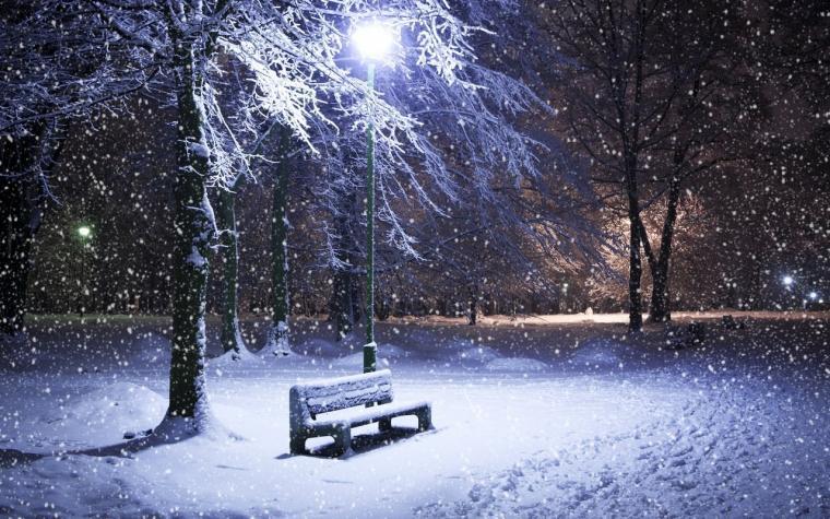 Amazing Winter Night   Frozen Tree in Winter Hd Wallpaper