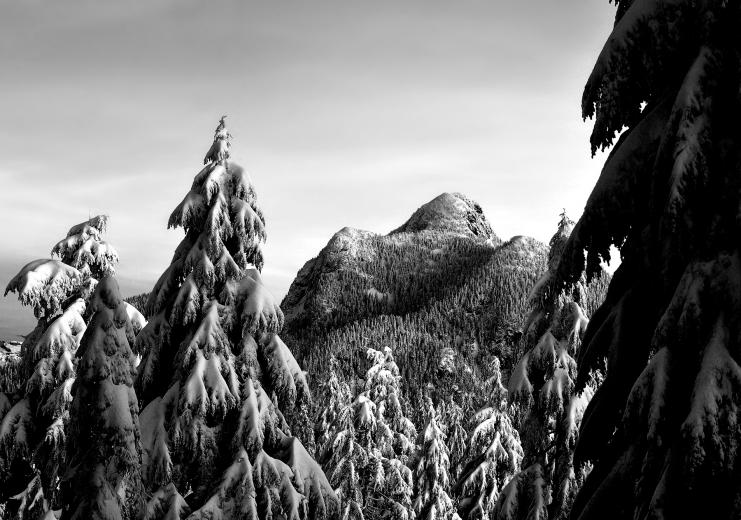 Trees BW Forest Snow Winter mountains black white monochrome wallpaper