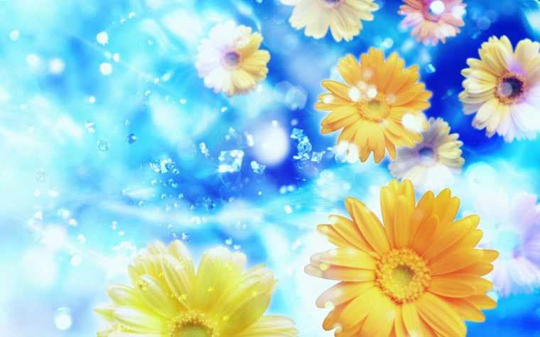 Wallpapers   HD Desktop Wallpapers Online Flower Wallpapers