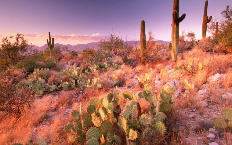 Best 41 Saguaro National Park Wallpaper on HipWallpaper