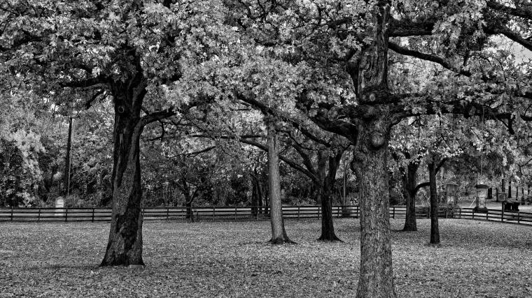 20 Black And White Forest Wallpaper 1080p HQ Wallpapers Download
