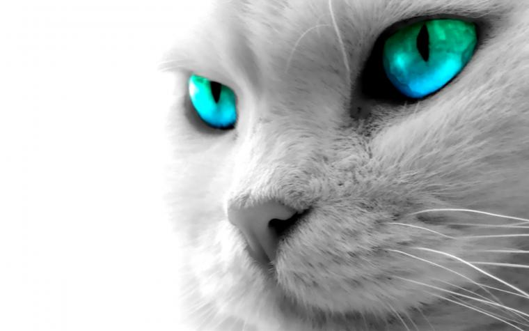 Animal Wallpaper Backgrounds For Desktop