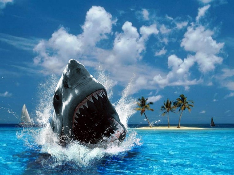 Shark Wallpapers with sea backgrounds suitable for adventures desktop