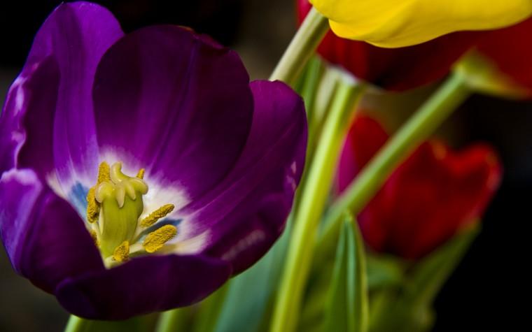 Beautiful Purple Flower Wallpapers HD Wallpapers