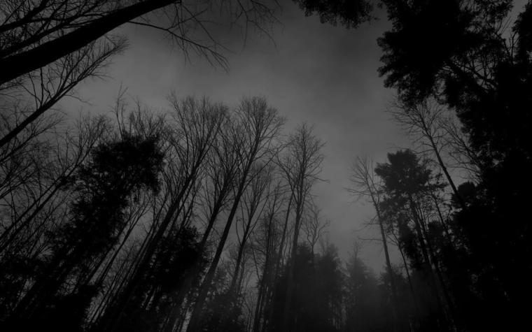 tumblr static forest black white dark forest wallpaperjpg