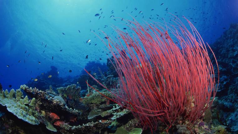 comwallpapersunderwater wallpapersfree underwater wallpaper
