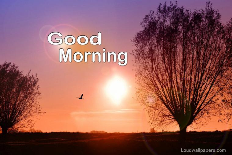 Good Morning Birds Wishes Wallpapers and Quotes