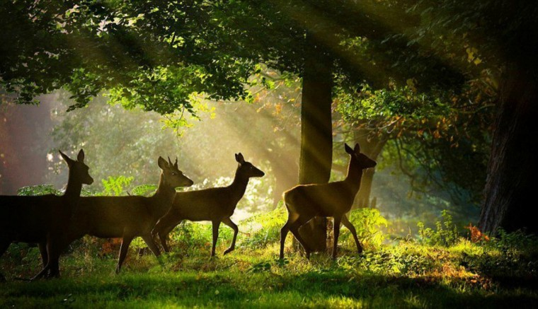 Most Beatiful Beautiful DEER Wallpapers In HD   Beautiful Wallpaper