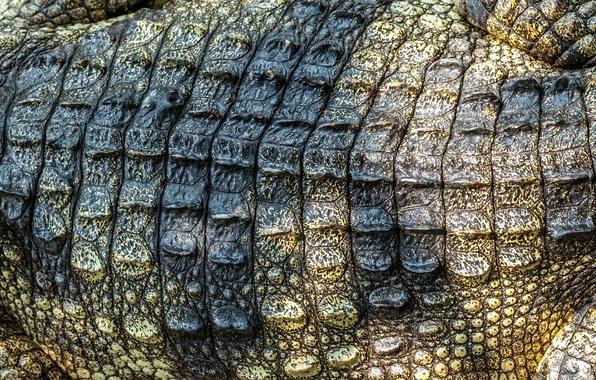 Crocodile skin leather texture crocodile skin wallpapers photos