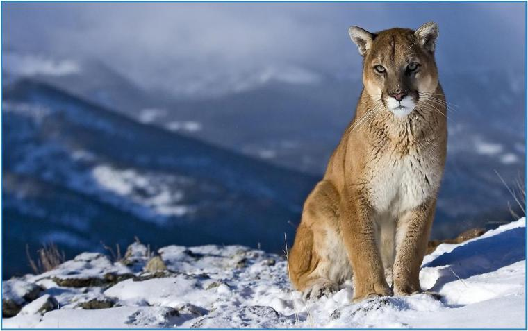Screensaver mac os mountain lion   Download