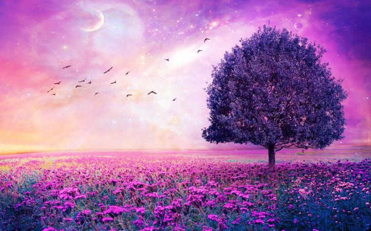 Purple Flower Field Wallpaper Purple Flowers Field Art