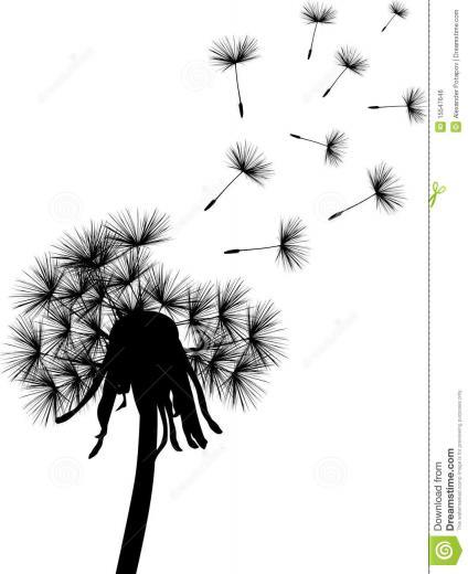 Dandelion Black And White Wallpaper Black dandelion plant