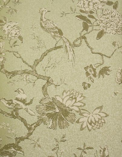 Wallpaper Maza bird wallpaper for walls