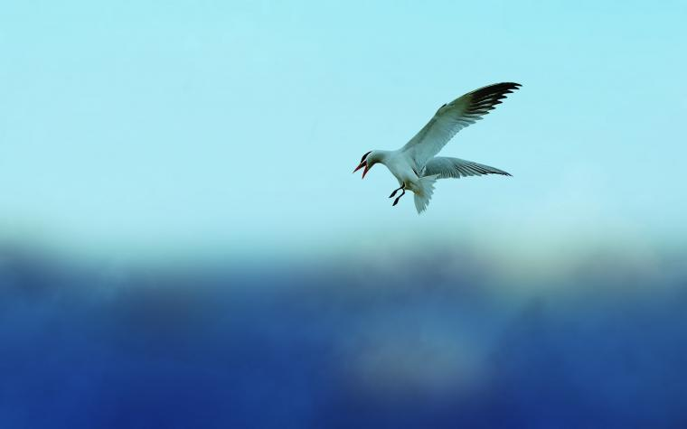 Bird Flight Wallpaper 44326 2560x1600px