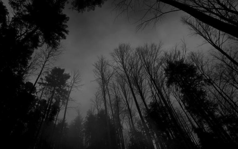 1280 x 800 wallpapers wallpaper 18162 forest black white darkjpg