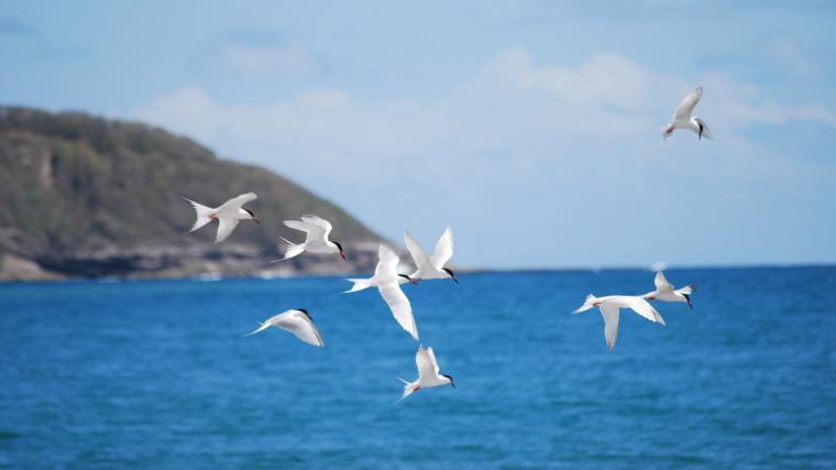 Flying birds Wallpaper 40396
