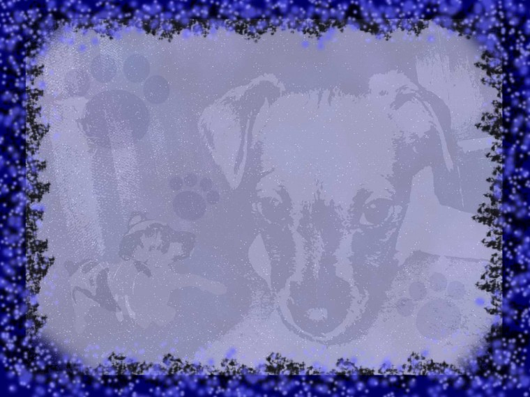 Puppy with Black and Blue Border desktop wallpaper WallpaperPixel