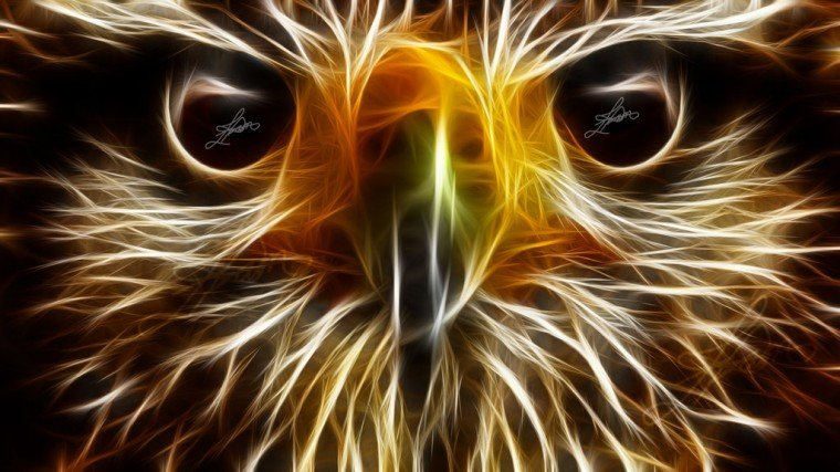 Cool Neon Animal Wallpaper Eagle animal wallpapers hd by