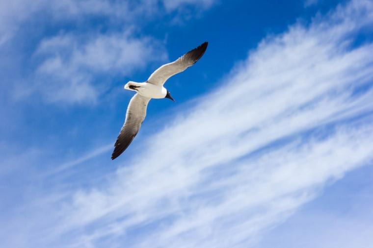 500 Flying Bird Pictures Download Images on Unsplash