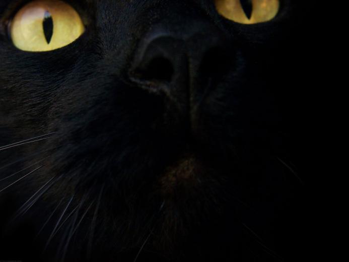 Black Cat Wallpaper   Black Wallpaper 28305470