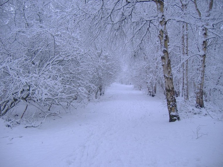 Winter scene Wallpapers Images and nature wallpaper Winter scene
