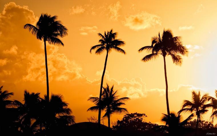 Palm trees at sunset background wallpaper HD Desktop Wallpaper