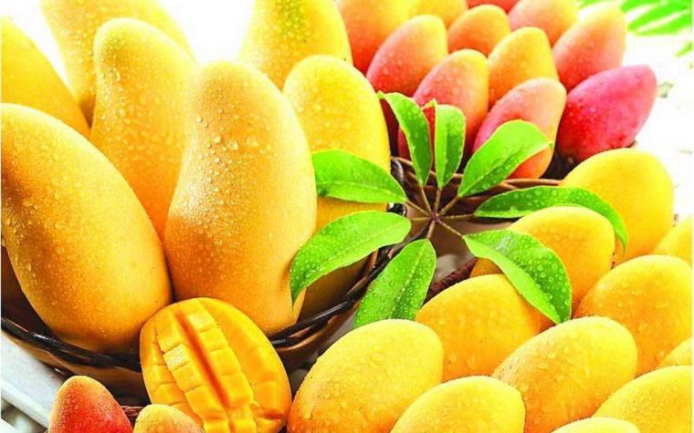 best chaunsa mango