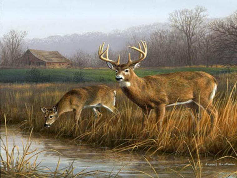 deer desktop hd wallpapers Desktop Backgrounds for HD
