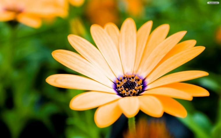 All photos gallery flower wallpaper flowers wallpaper