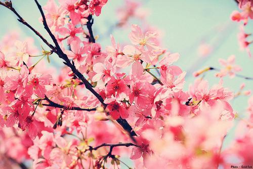 flowersfloral