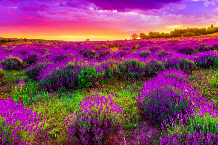 Beautiful Spring Landscape Widescreen Wallpapers