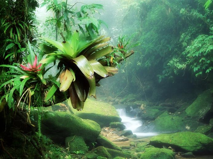 Jungle House Wallpaper images