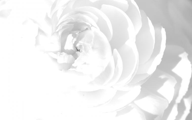 White Wallpaper 9
