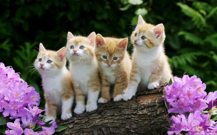 Cute Kitten Desktop Wallpaper wallpaper   1011411