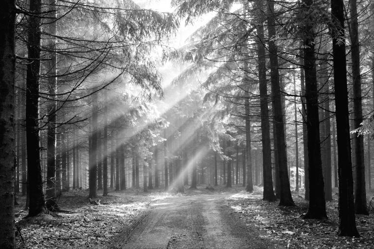 forest background black and white Wallpaper Forest 273 high quality