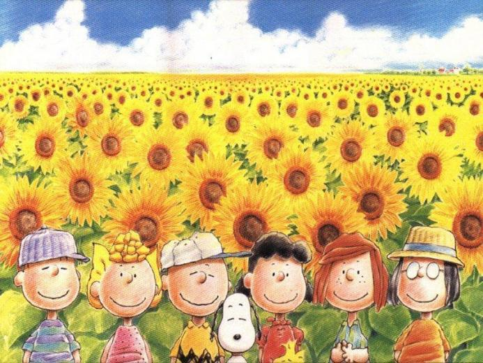 Peanuts peanuts in sunflower meadow