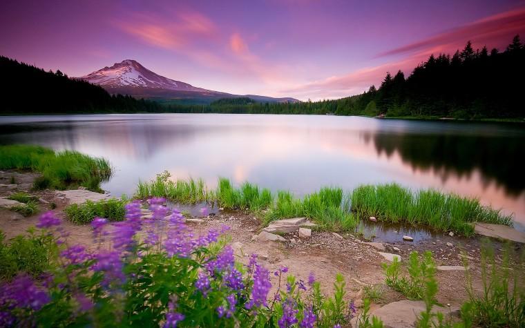 Beautiful Pink Landscape Nature HD Wallpaper   StylishHDWallpapers