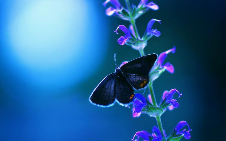 Cool night and blue butterfly and flowers wallpapers HD