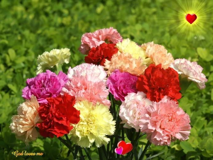 God wallpaper   colorful carnation