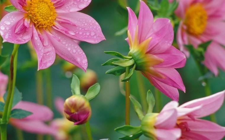 flowers for flower lovers Desktop Beautiful Flowers HD Wallpapers