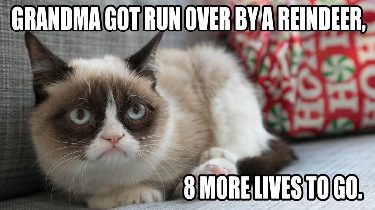Cat Meme 5 Background Wallpaper