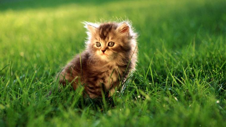 Cat Cute Animal HD Wallpapers